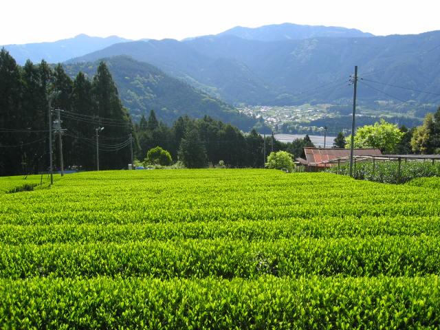 静岡茶・川根茶・お茶の販売 相藤農園